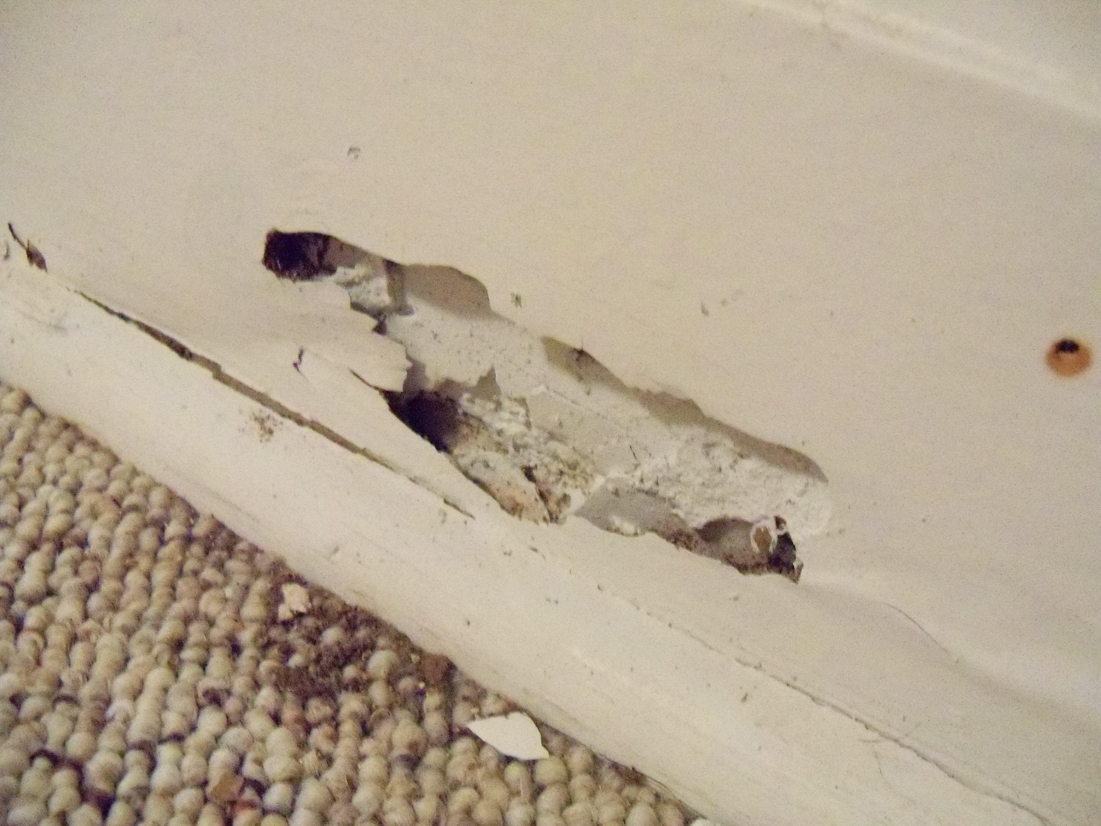 Termite Damage in Cache Valley