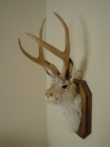 The Common Jackalope